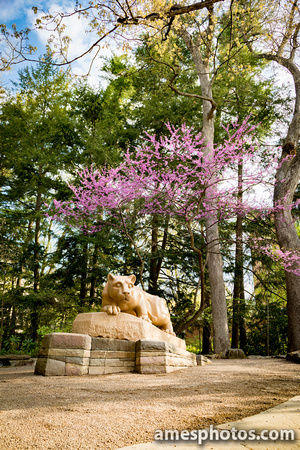 Nittany Lion in May, 2018
