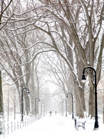 Penn State Elms in Winter