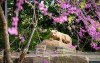 Nittany Lion May 2014