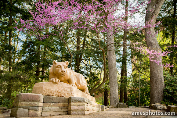 Lion Shrine Spring 2018, landscape