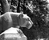 Snow covered Nittany Lion - black and white